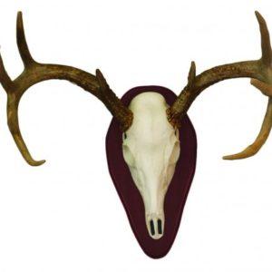 deer mounting